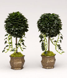 Set of ivy topiaries in JKM pots